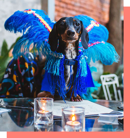 Pet Boarding in New Orleans | Near You | Pawlins