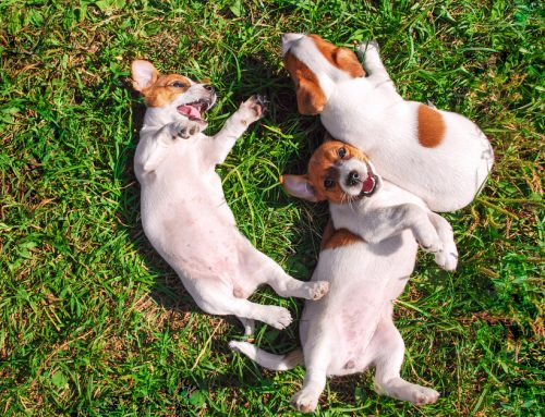 The 5 W's (and 1 H) of Pet Socialization